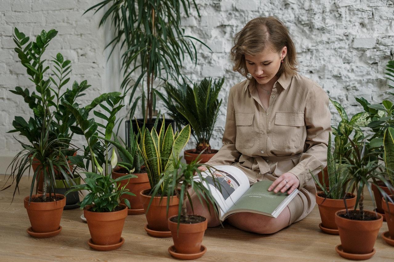 Nutrient Deficiencies in Plants